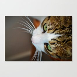 knowing eyes Canvas Print