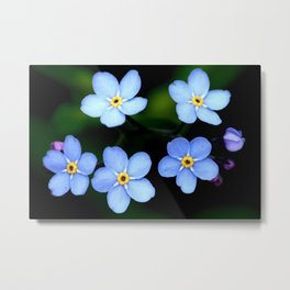 Forget-me-not Tiny Blue Flowers #decor #society6 Metal Print