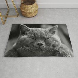 Cat, Cats - Love Cats Rug