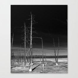 Lodgepole Pines Canvas Print