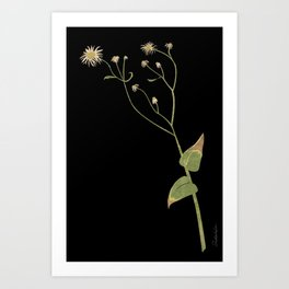 Collage of a Flowering Weed Art Print