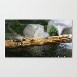 Turtle on a Log Canvas Print