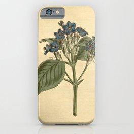 Flower 1358 justicia nervosa Blue flowered Justicia10 iPhone Case