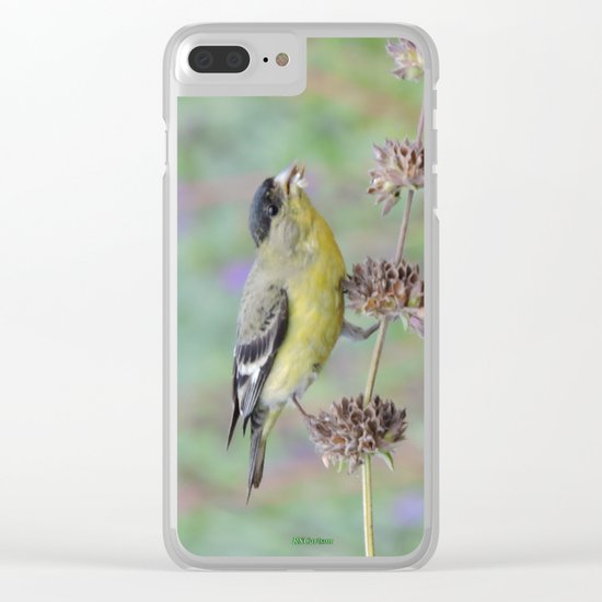 Lesser Goldfinch Snacks on Seeds Clear iPhone Case