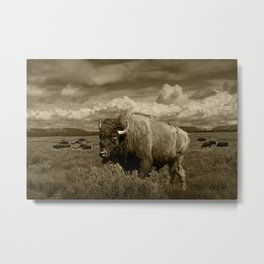 American Buffalo Bison in the Grand Teton National Park in Sepia Tone Metal Print