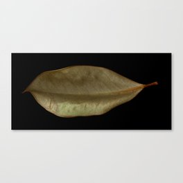 'Magnolia Leaf' Canvas Print