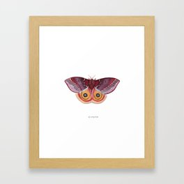 Io Moth Framed Art Print