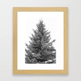 B&W White Spruce Framed Art Print