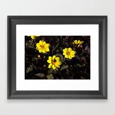 Bee in a Flower Framed Art Print