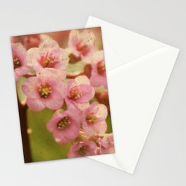 Little Belles Stationery Cards
