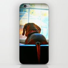 How Much Is That Doggie In The Window? iPhone & iPod Skin