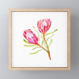 Pink Protea Framed Mini Art Print