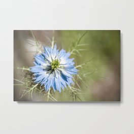 Blue flower close up Nigella love in the mist Metal Print