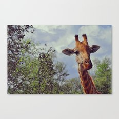 Closer, closer, how about now? Canvas Print