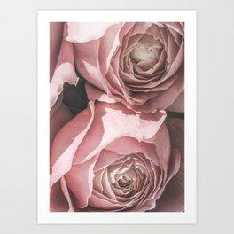 Powdery Pink Roses Art Print