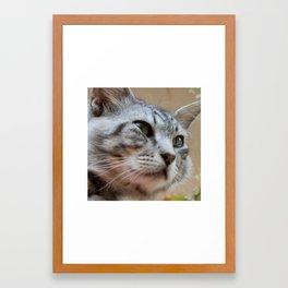 Grey Cat Face Framed Art Print
