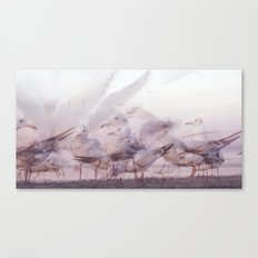SONGS OF BIRDS | White Seagulls Canvas Print