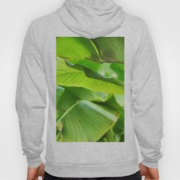 Green palm leaves | Minimalist nature photography Hoody