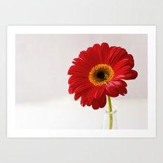 red gerbera Art Print
