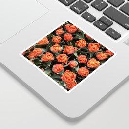 Tulips on fire Sticker