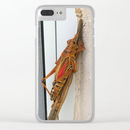 Eastern Lubber Grasshopper Clear iPhone Case