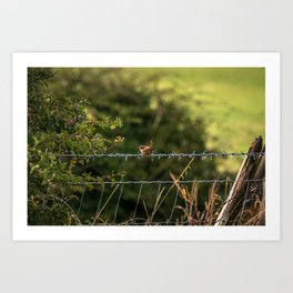 Wren Songbird Bird on a Wire (Troglodytes) Art Print