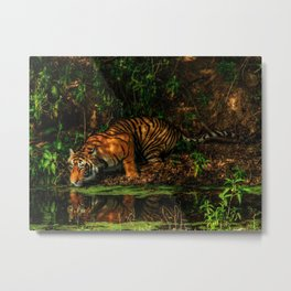 The Royal Bengal Tiger ( Metal Print