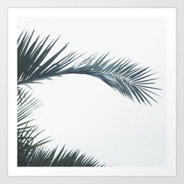 palmtree Art Print
