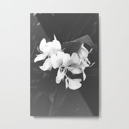 Hedychium Coronarium White Ginger Lily Black and White Photography Metal Print