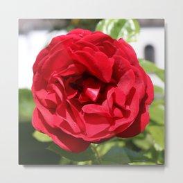 Dark red Rose Bardou Job Metal Print