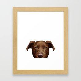 Labrador brown Framed Art Print