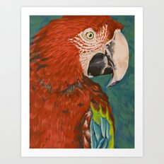Green-winged Macaw Art Print