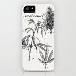Cannabis sativa iPhone Case