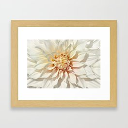 Dahlia white macro 043 Framed Art Print