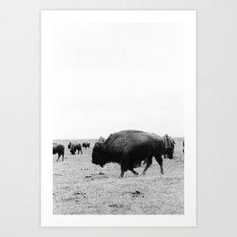 Buffalo Hustle Art Print