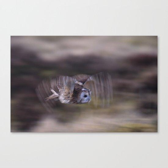 TAWNY OWL FLAP Canvas Print
