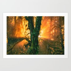 Sunset on Tree in the Hoh Rainforest - Travel Sunset Forest Nature Trees sun green hiking adventure Art Print