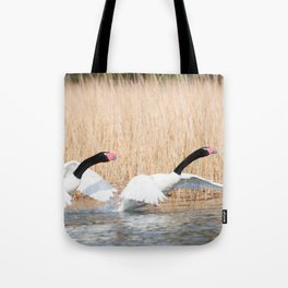 swans taking off! Tote Bag