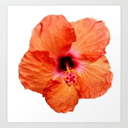 Just the Hibiscus Art Print