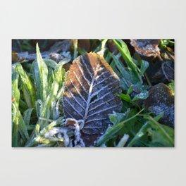Winter's Kiss Canvas Print