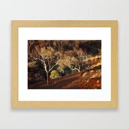 Eucalyptus trees in evening sunlight, Karijini National Park, Western Australia Framed Art Print