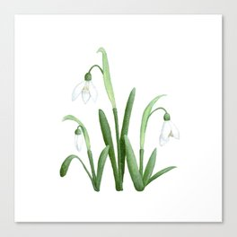 Snowdrops Floral Painting Canvas Print
