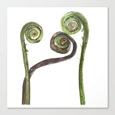 Etched Into Nature No.2 Forest Fiddlehead Ferns Canvas Print
