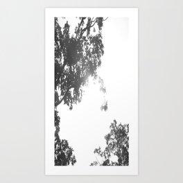 Sun through the trees Art Print
