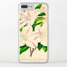 Azalea Alba Magnifica (Rhododendron indica) Vintage Botanical Floral Scientific Illustration Clear iPhone Case