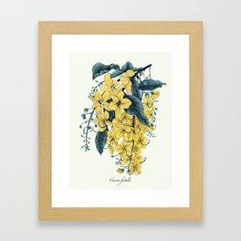 Cassia fistula Framed Art Print