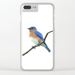 Eastern Bluebird Clear iPhone Case