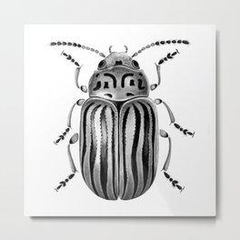 Beetle 06 Metal Print
