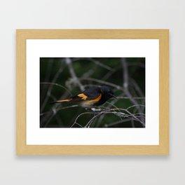 American Redstart Framed Art Print