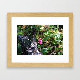 Pink Lady Slipper Framed Art Print